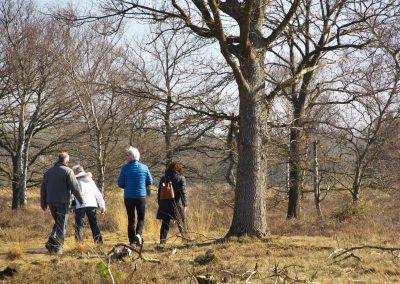 Wandeling met de Croyse Ridders door de Strabrechtse Heide.